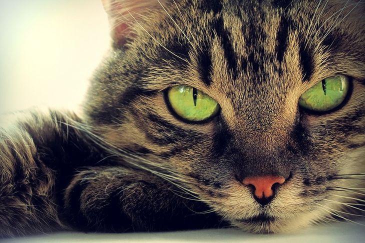Zdjęcie kota pochodzi z serwisu Shutterstock