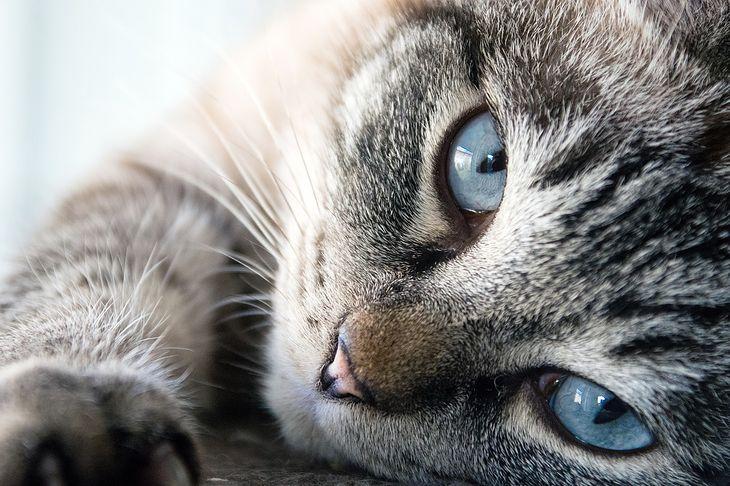 Co kot robi, gdy właściciel śpi?