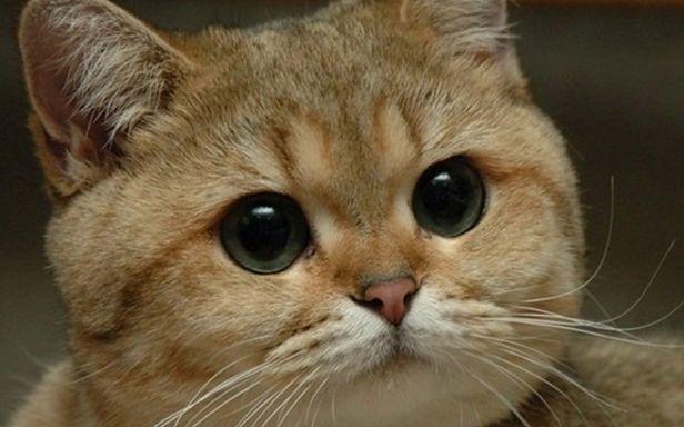 Kot paczacz