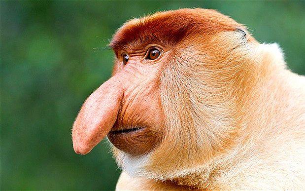 Jakie zwierze przypomina Ci poprzednik? - Page 40 Monkey-2585151b-412931-d6ecd7fd3
