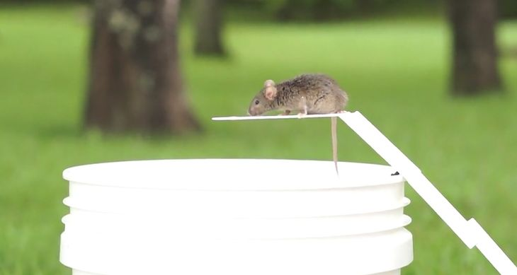MouseDunk