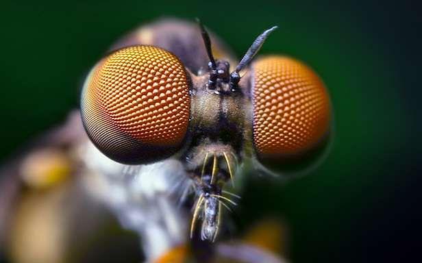 Oczy owada (Fot. DangerRoom / Wired)