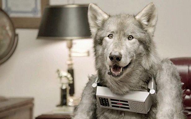 Mr. Wolfdog