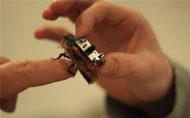 Do czego może przydać się zdalnie sterowany owad?