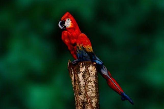 Ta papuga to w rzeczywistości pomalowana kobieta