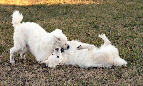 Pielęgnacja psiej sierści