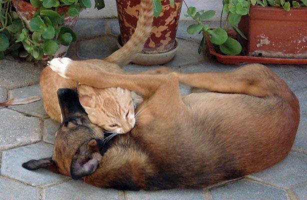 Psi i koci ogon - co wyrażają? (fot.: sxc.hu)