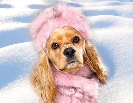 pies na sniegu