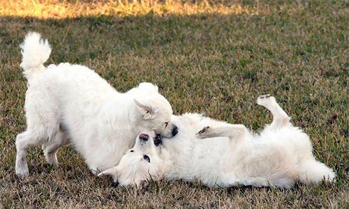 Antykoncepcja pod psem