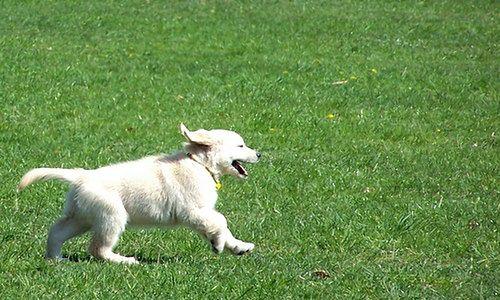 Jak zlokalizować psa?
