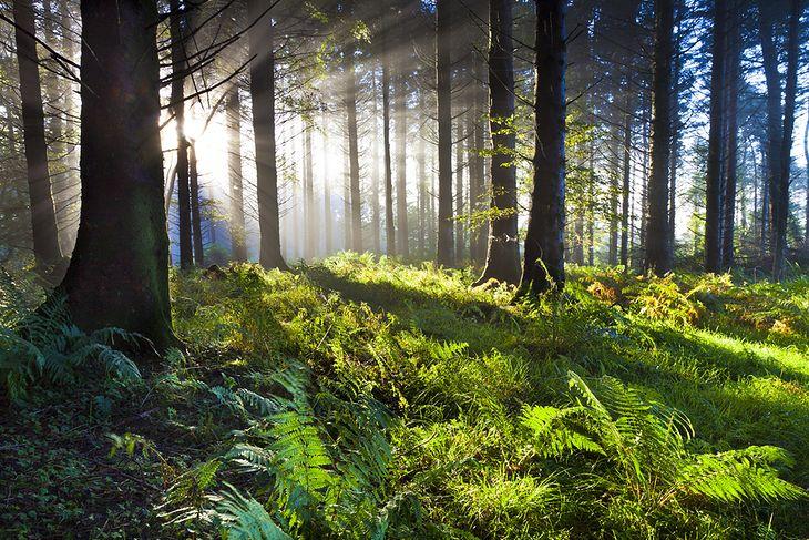 Zdjęcie lasu pochodzi z serwisu Shutterstock