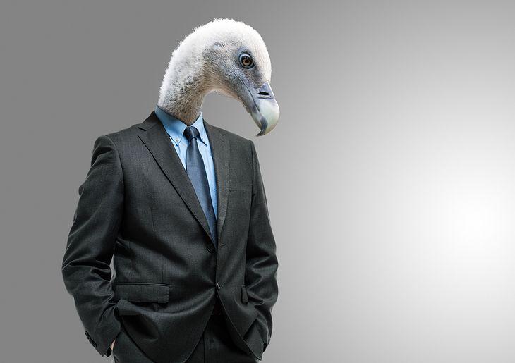 Zdjęcie ptaka pochodzi z serwisu shutterstock.com.