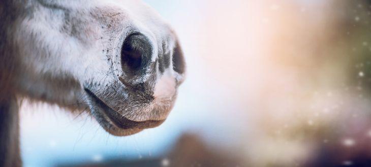 Zdjęcie nosa pochodzi z serwisu Shutterstock