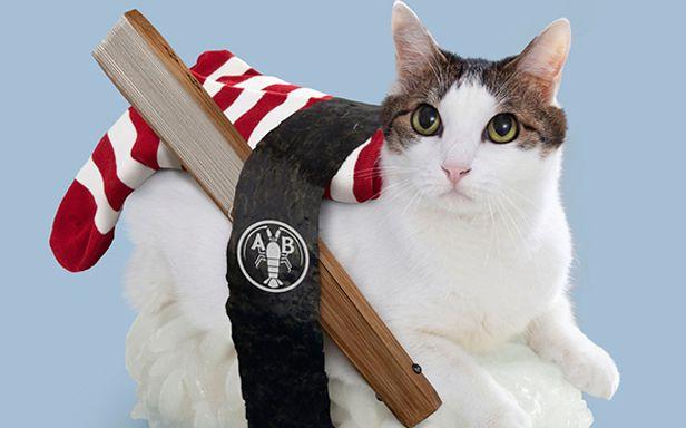 Kot i sushi w jednym