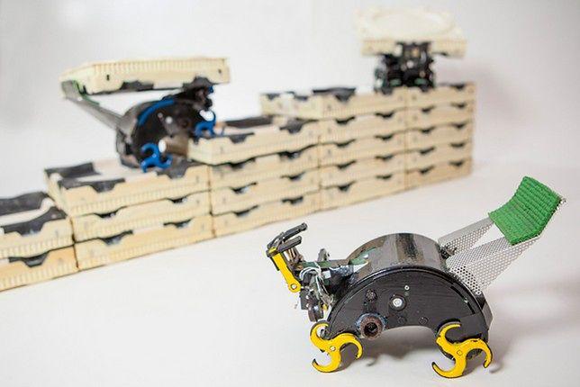 Roboty naśladują zachowanie termitów (Fot. Harvard.edu)