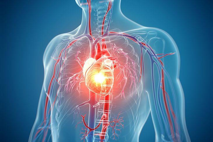 Grafika przedstawiająca serce w klatce piersiowej pochodzi z serwisu Shutterstock