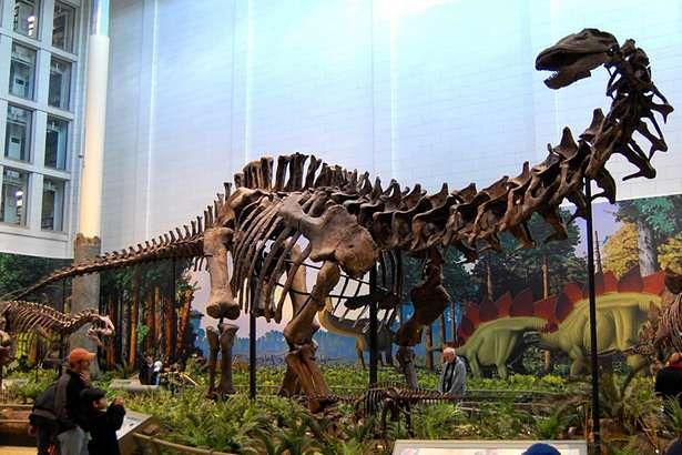 Apatosaurus louisae (Fot. Wikimedia Commons)