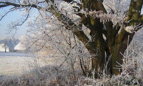 Wzmocnij odporność przed zimą (fot.: rgbstock.com)