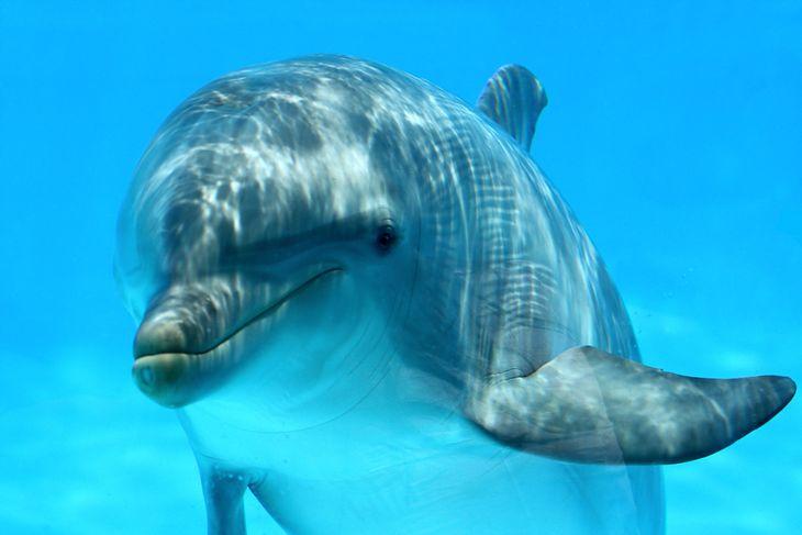 Słodki delfin (fot. depositphotos.com)