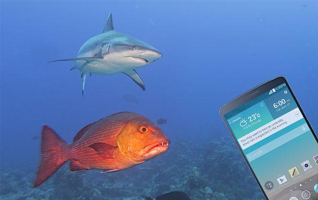 Zmodyfikowane zdjęcie: Shark jaws ready to attack underwater close up portrait