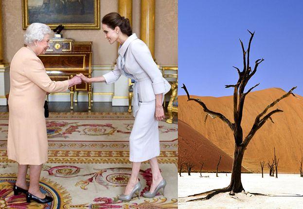 """Angelina Jolie będzie SADZIĆ DRZEWA z Elżbietą II! """"To jest coś, czego uczę moje dzieci"""""""