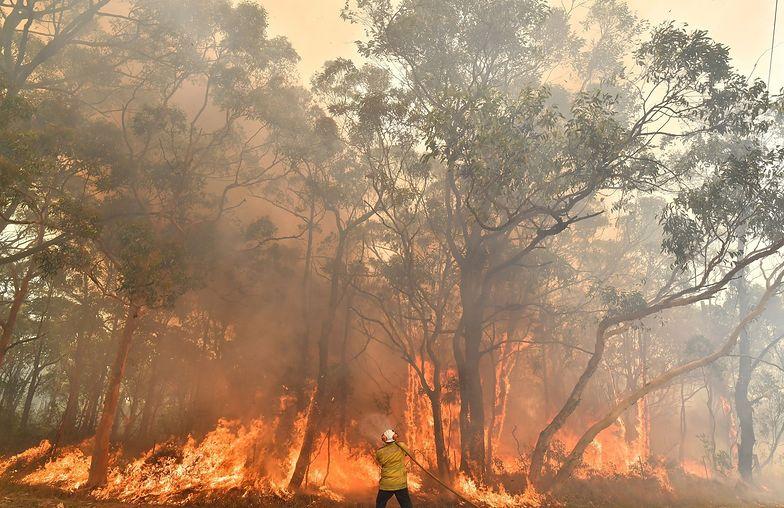 Pożary w Australii. Setki turystów uwięzionych przez ogień