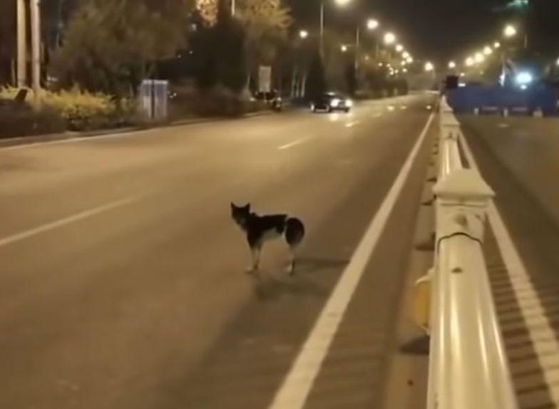Pies czekał 83 dni w miejscu, gdzie zginęła jego właścicielka