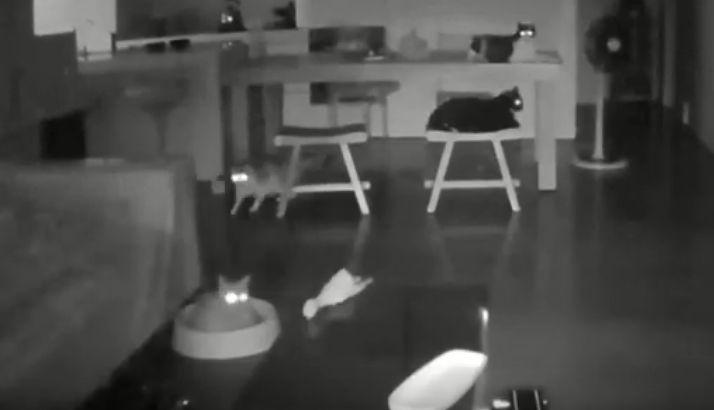 Koty obudzone przez trzęsienie ziemi