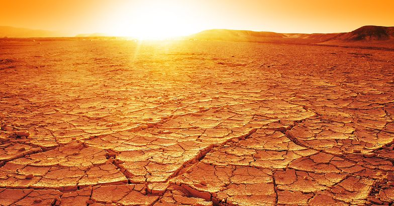 Wstrząsające skutki globalnego ocieplenia. To będzie zagłada zwierząt