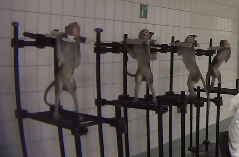 Skandal w niemieckim laboratorium. Cierpiące zwierzęta poddawane testom i kara w kwocie... 300 euro