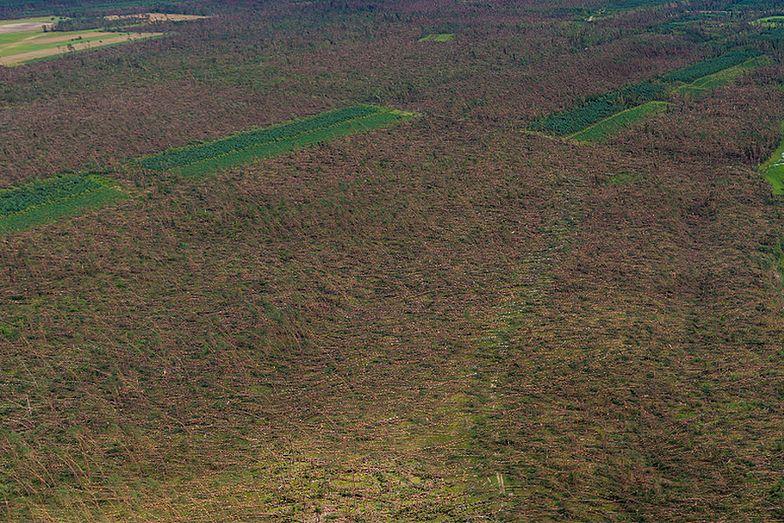 Nawałnica w okolicach Suszka wywarła wielkie spustoszenie