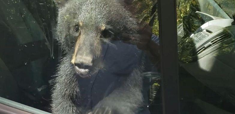Dwa niedźwiadki zatrzasnęły się w samochodzie w amerykańskim stanie Tenessee.