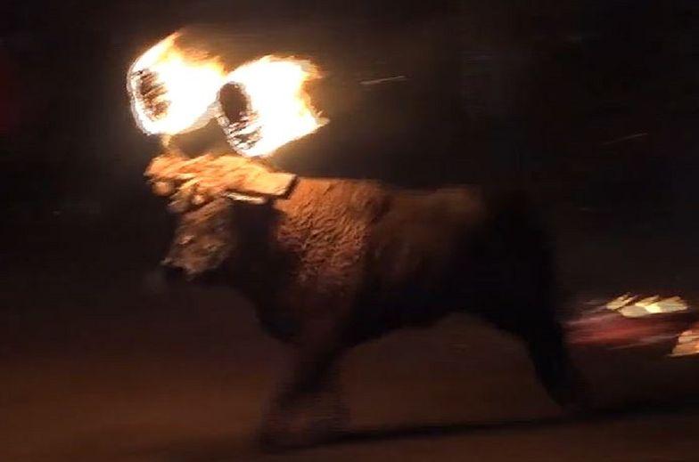 Znęcali się nad bykiem. Szokujące nagranie z festiwalu w Hiszpanii
