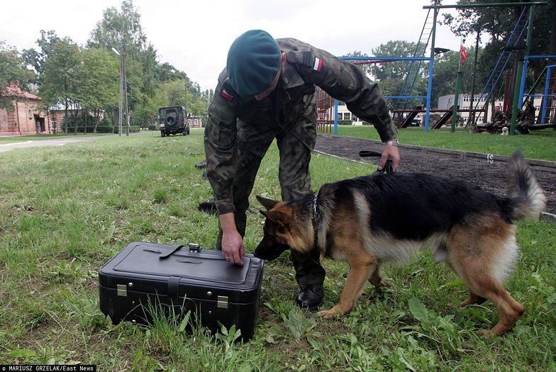 Armia będzie mogła korzystać z psów służbowych w czasie akcji ratowniczych.