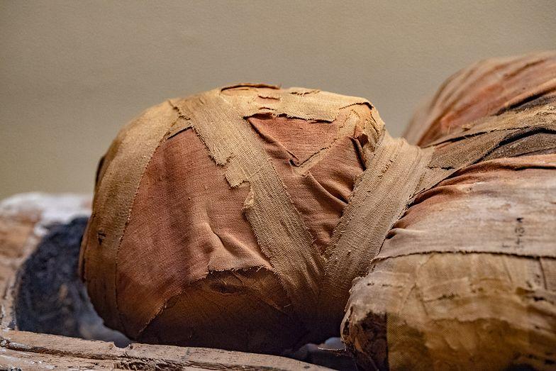 Wyniki badań były zaskakujące. Starożytne mumie odkryły tajemnice