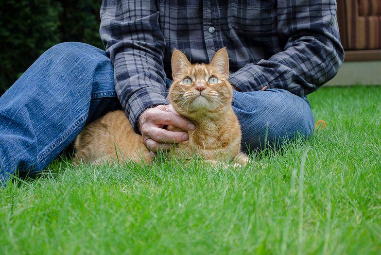 USA. Kot zaraził właściciela śmiertelnie groźną chorobą