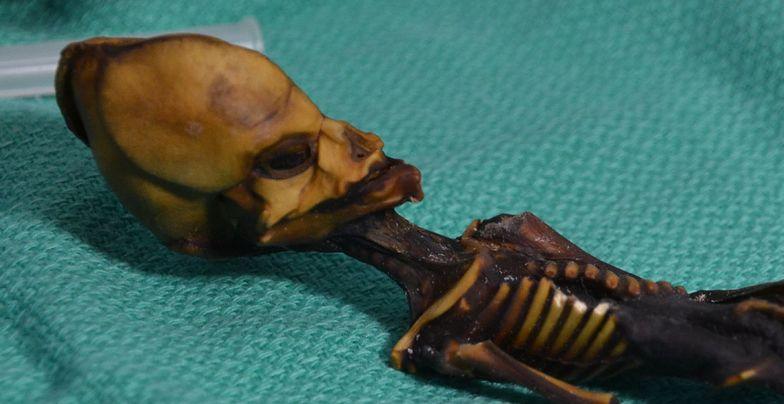 Zbadali tajemniczy szkielet. To żaden kosmita