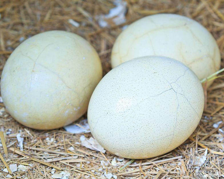 Hilton wycofa jajka klatkowe.