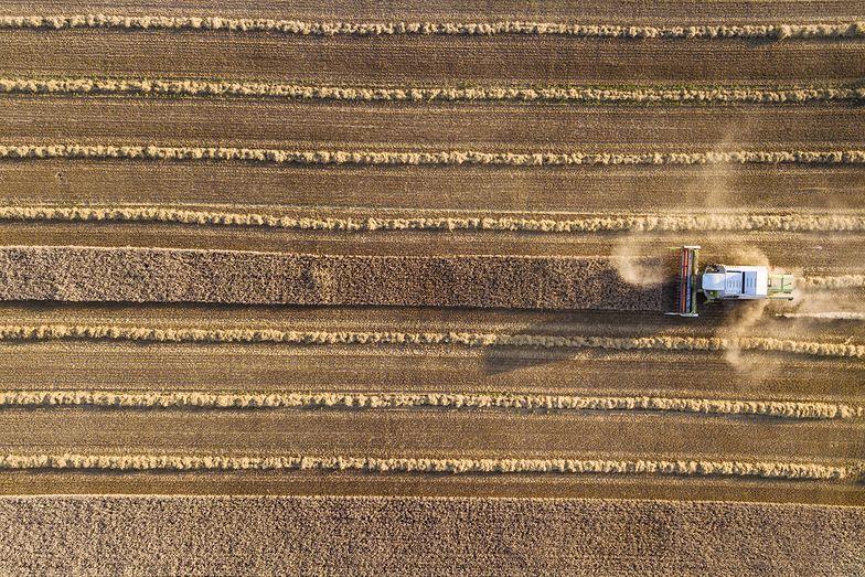 """Rolnicy alarmują. Dramatyczna susza. """"Rośliny wysychają na pniu"""""""