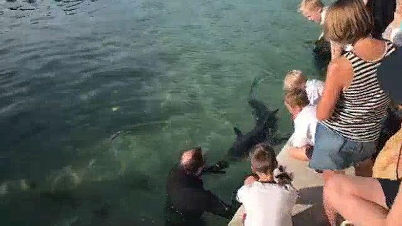Koronawirus na świecie. Australijczycy zignorowali zakazy, żeby zobaczyć rekina.