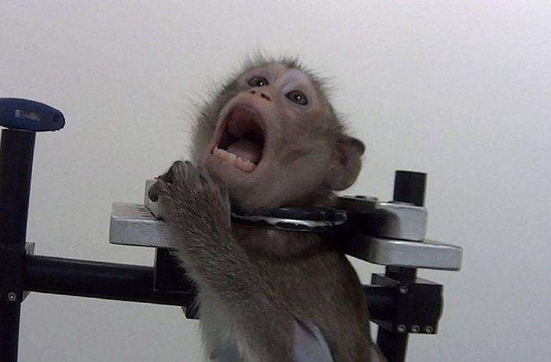 Psy i małpy wyły z bólu. Nowy skandal w laboratorium LPT