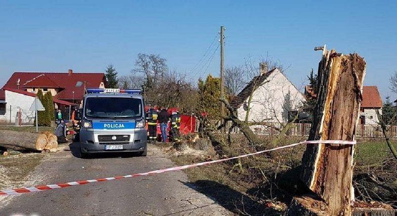 Wycinali przydrożne drzewa. Tragedia w Brynicy