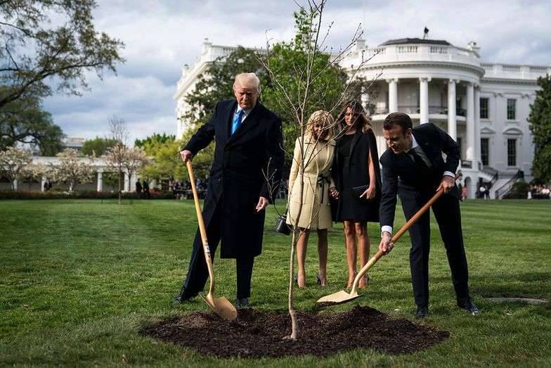 Było symbolem przyjaźni Trumpa z Macronem. Słynne drzewo zwiędło