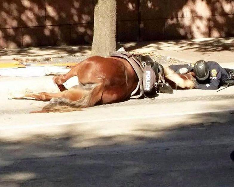 Ranny policjant był przy umierającym zwierzaku do końca