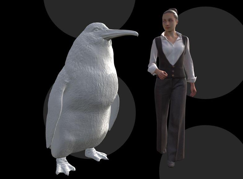 Gigantyczny pingwin znaleziony w Nowej Zelandii. Był wielkości człowieka