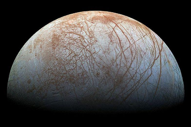 """Kosmos. Życie poza Ziemią istnieje? """"Te istoty przypominają ośmiornice"""""""