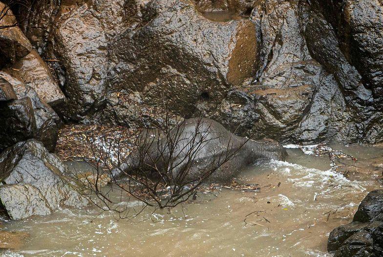 Tajlandia. Ciała 5 słoni odnalezione w wodospadzie