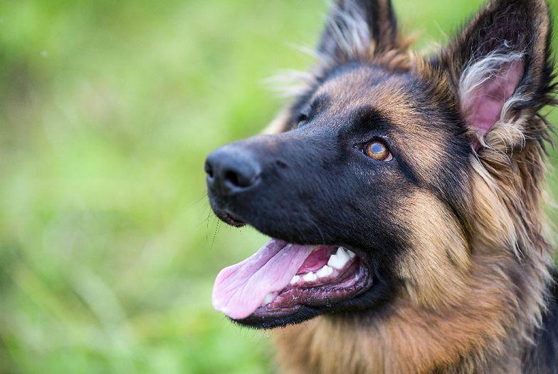 Starożytny pies odsłoni tajemnice ludzi