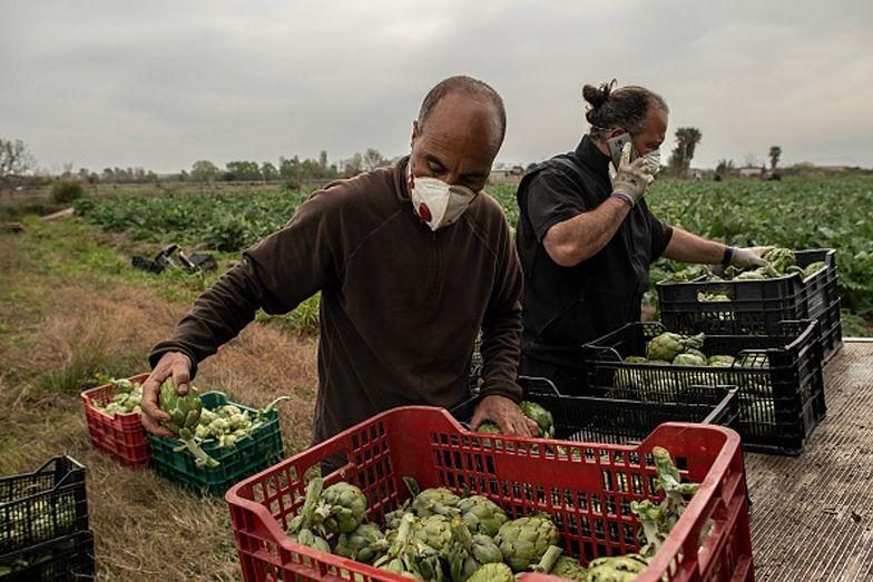 Koronawirus w Europie. Rolnicy ostrzegają przed niedoborami żywności