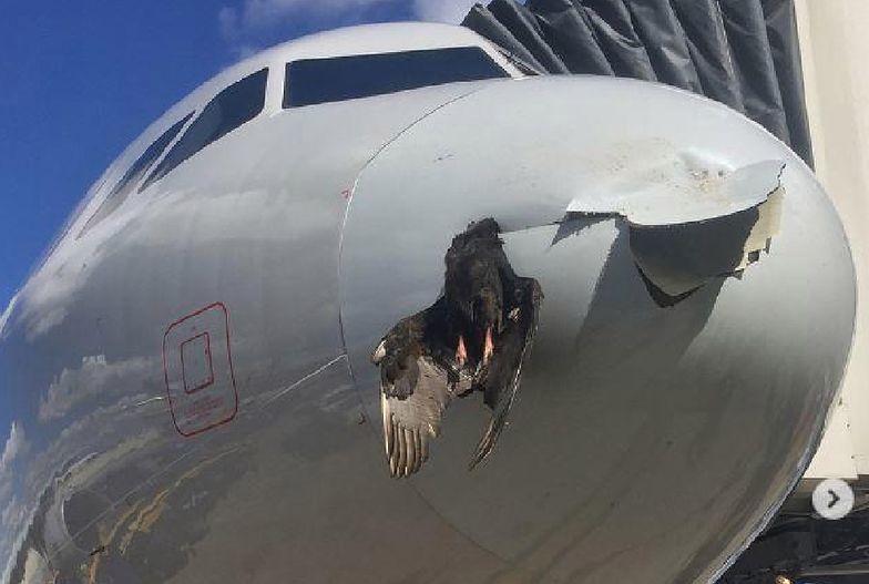 """Odrzutowiec lądował z ptakiem wbitym w nos. """"Tego jeszcze nie widzieliśmy"""""""